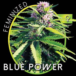 BluePowerB.jpg