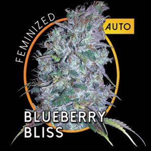 BlueberryBlissAutoB.jpg