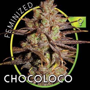 ChocoLocoB.jpg