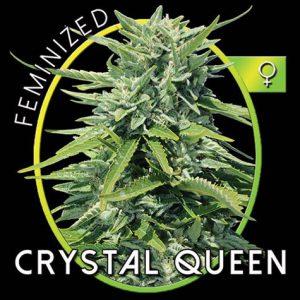 CrystalQueenB.jpg