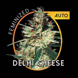 DelhiCheeseAutoB.jpg