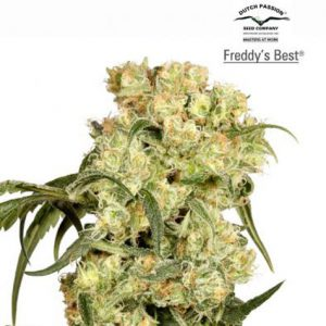 FreddyBest.jpg