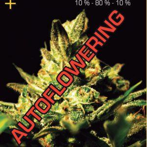 GHSuper-Critical-Autoflower.jpg