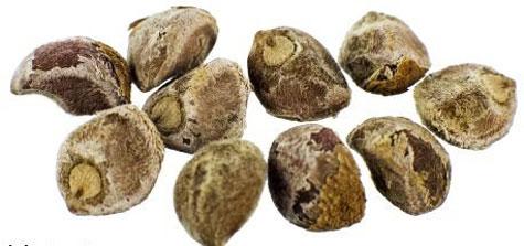 Hawaiian Bay Woodrose Seeds Contain The Hallucinogen Substance Lsa