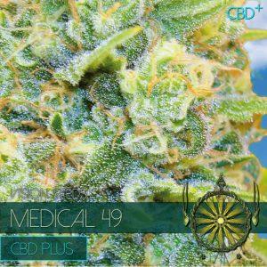 visionseedsmedical49
